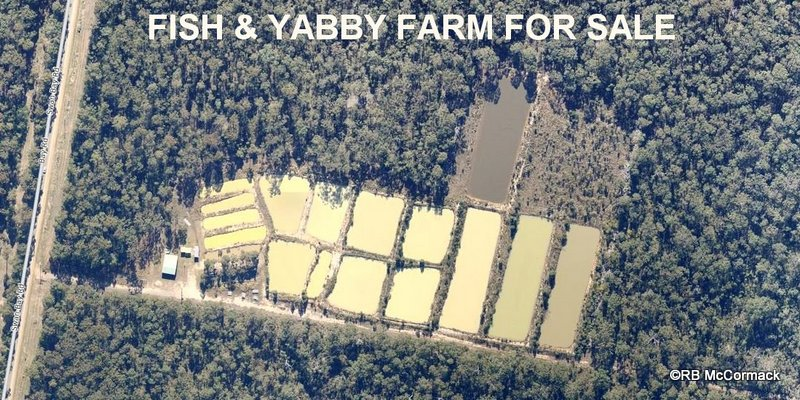 Yabby and Fish Farm For Sale