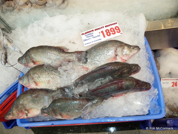 Yellowbelly or Golden Perch can be grown in dams