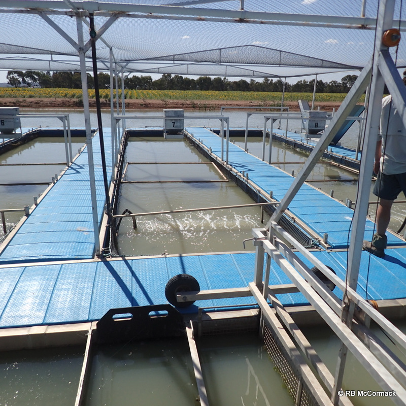 Floating Murray Cod cages