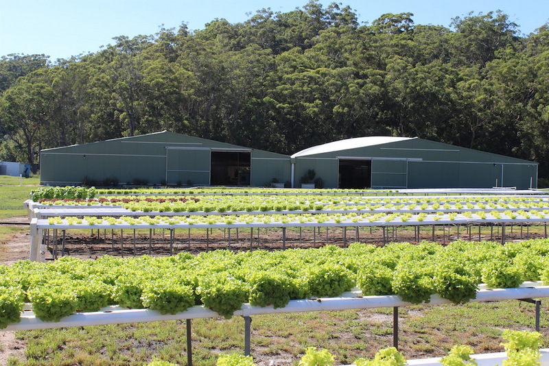 Integrated Aquaculture Hydroponic leafy greens at Tailor Made Fish Farm