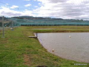 Commercial Yabby Ponds