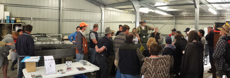 Rob McCormack discussing yabby markets and sizes