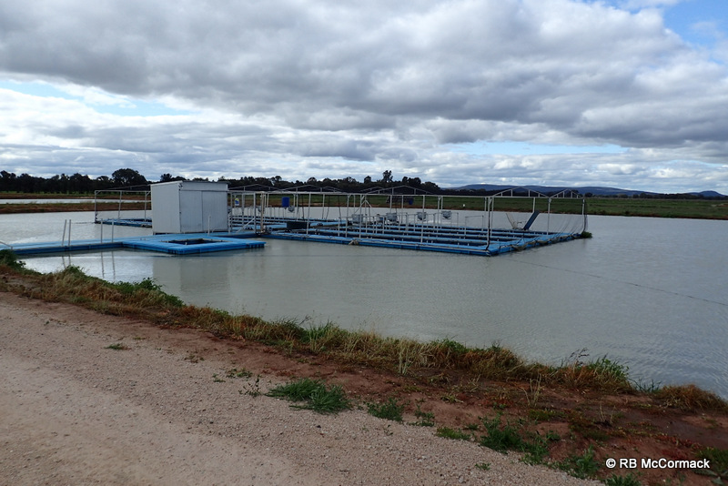 Murray Cod cages
