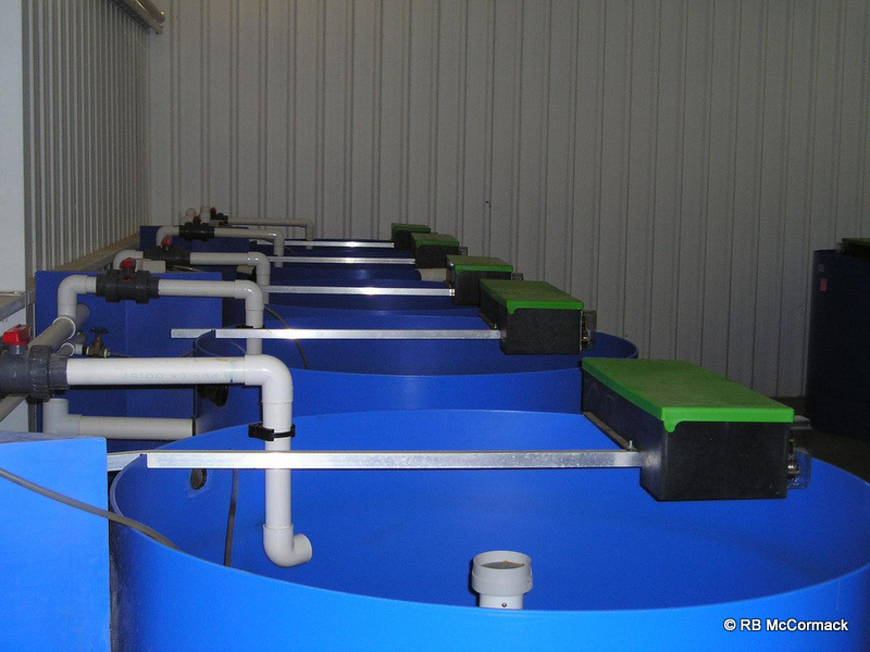 Weaning Tanks with AGK auto belt feeders