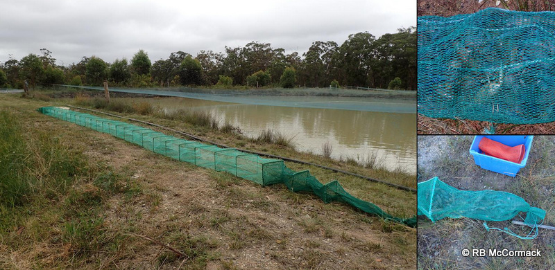 Super yabby trap