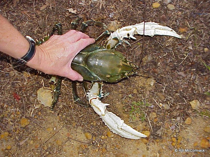 Crayfish pet food