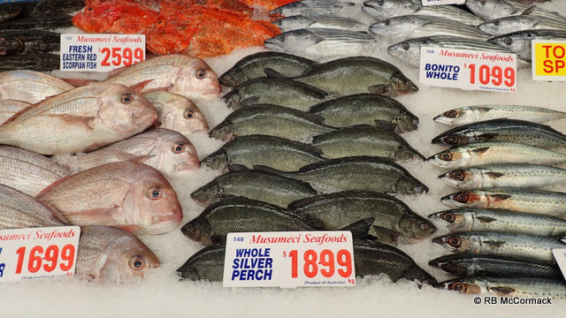 Silver Perch for sale at Sydney Fish Markets