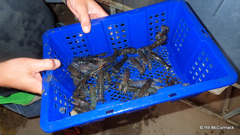 Yabby holding crates